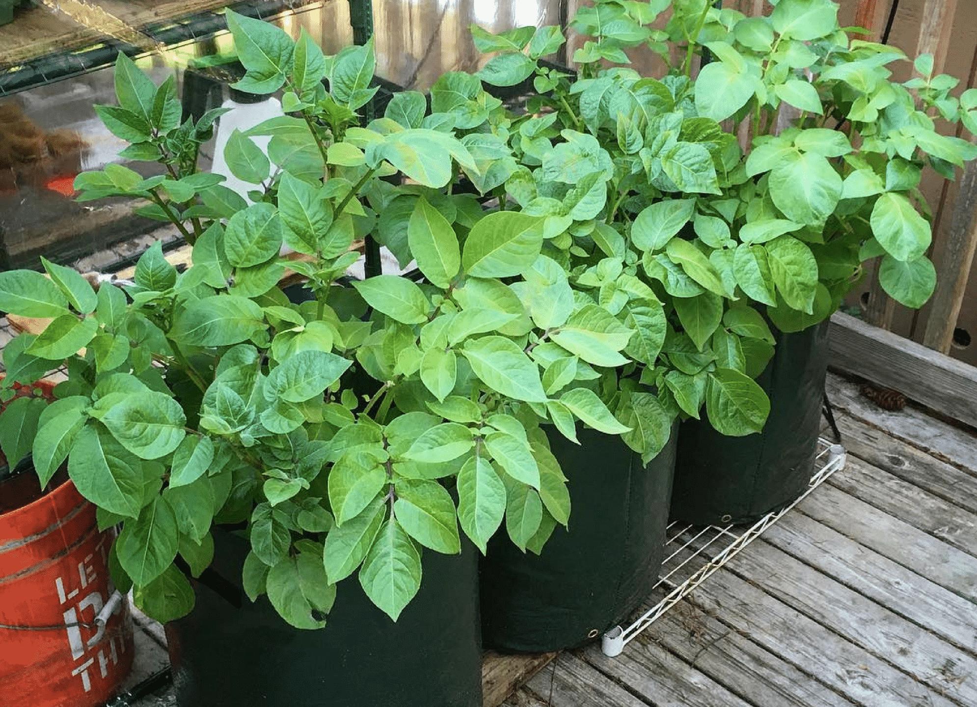 C mo usar las bolsas para cultivo de plantas succulent for Que son cultivos asociados