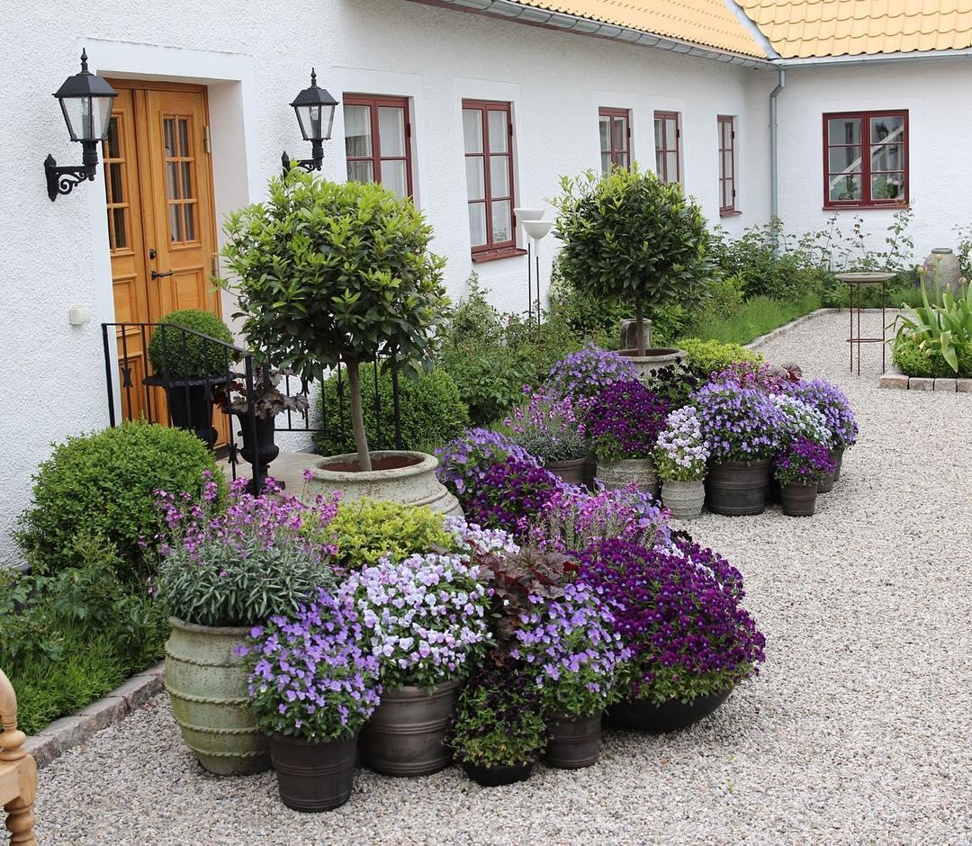 Tipos de plantas ornamentales succulent avenue - Arboles ornamentales para jardin ...