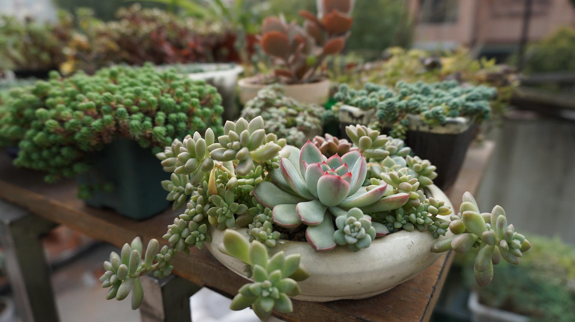 Ver fotos de plantas suculentas 29