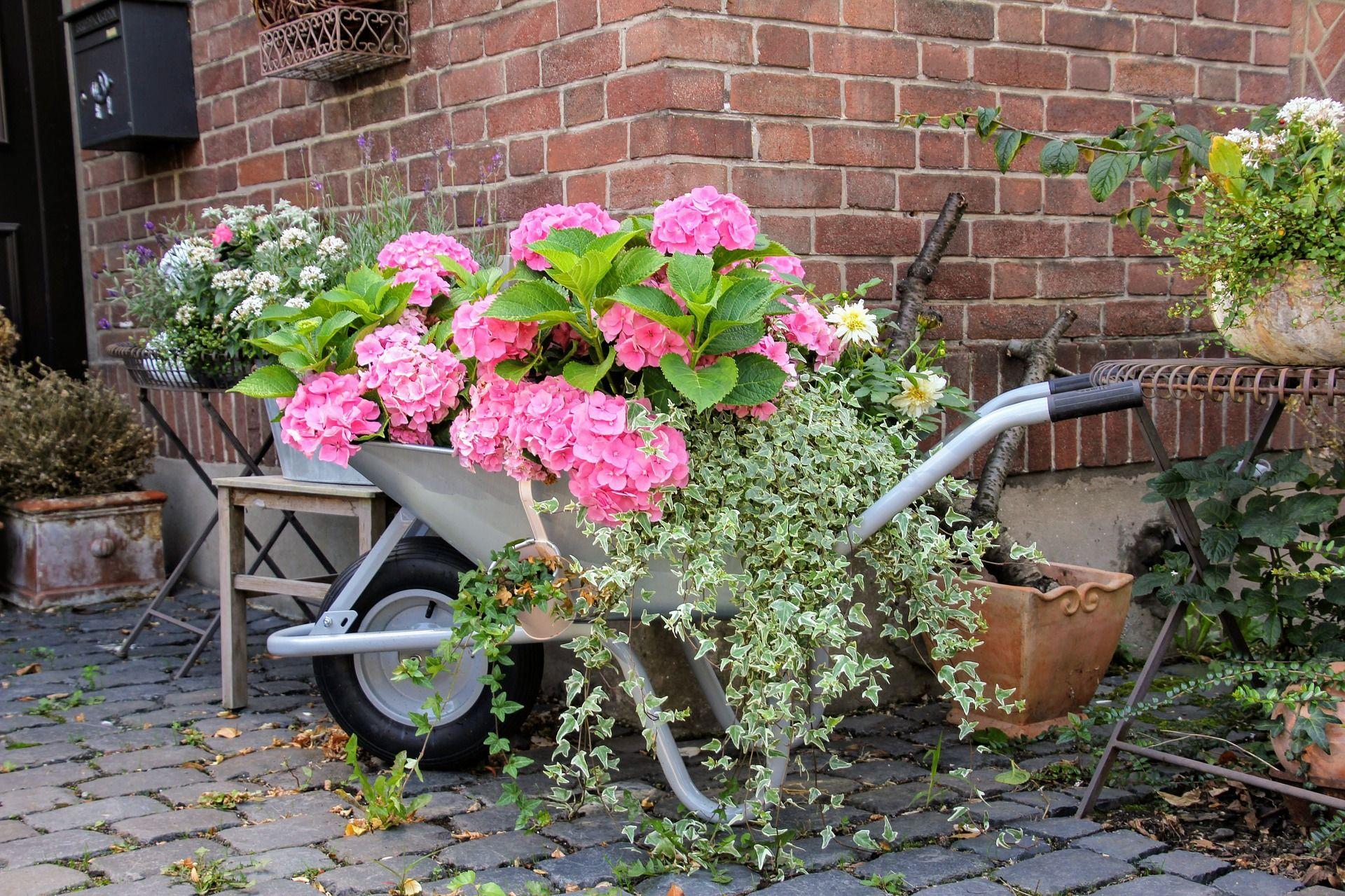 Carretillas Con Flores Para Adornar El Jardin Succulent Avenue - Como-decorar-un-jardin-con-plantas-y-flores