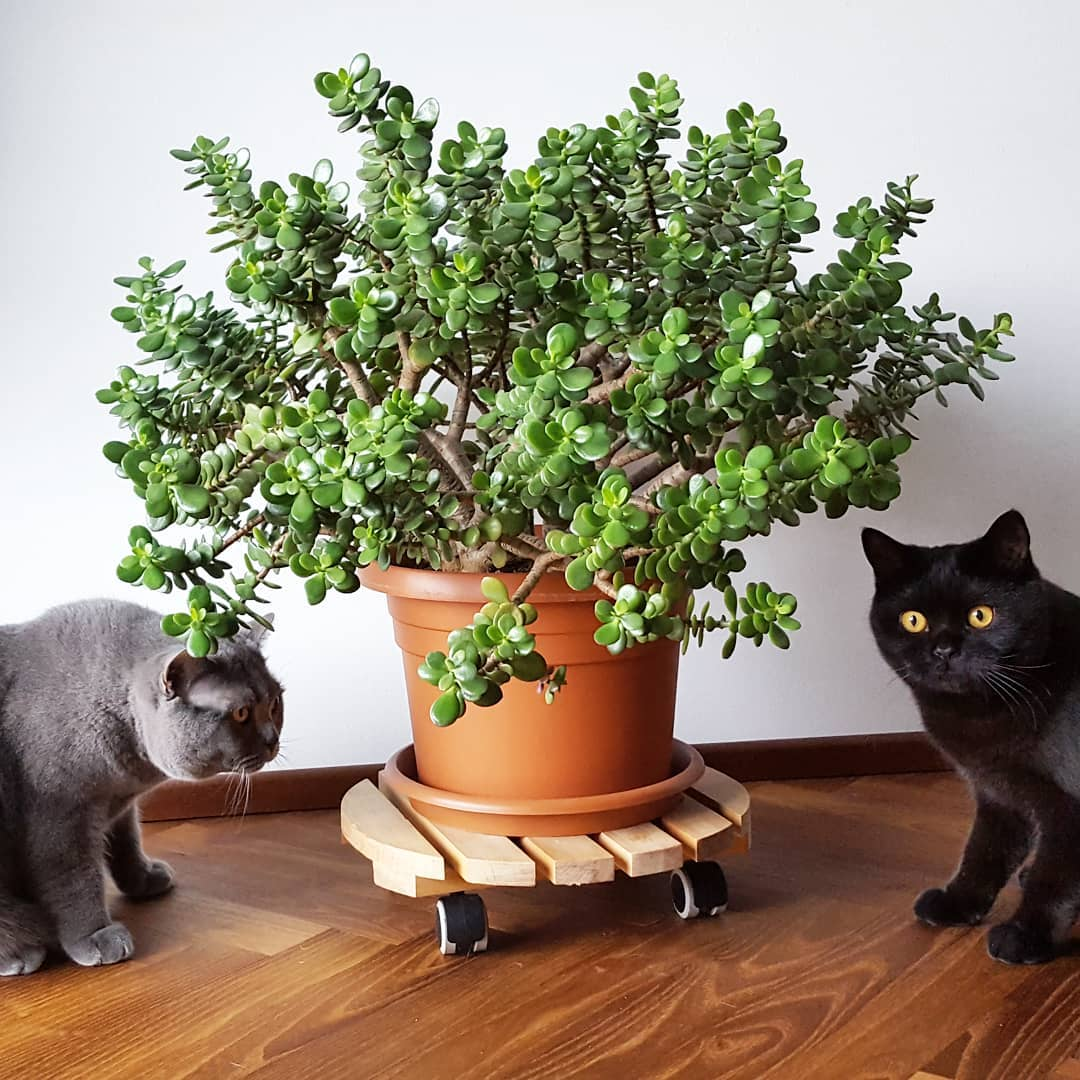 Plantas de interior venenosas para perros home plan - Plantas venenosas de interior ...