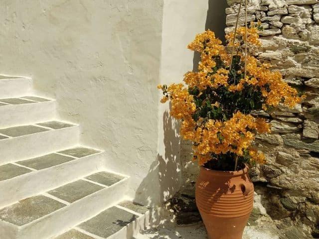 C mo cuidar las buganvillas en macetas succulent avenue - Como cuidar las hortensias en maceta ...
